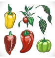 Set of colored bell peppers vector image
