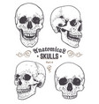 anatomical skulls set vector image vector image