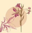 lily background floral greeting card invitation vector image vector image