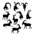 monochrome wild goat silhouettes collection vector image