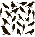 set birds silhouettes vector image