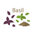 set fresh basil leaves and dried spice on vector image vector image