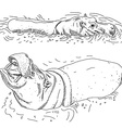 hippos in water isolated black contour on white vector image