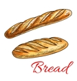 Bread sketch with french baguette and long loaf vector image vector image