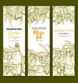 olive oil sketch banner set for food design vector image