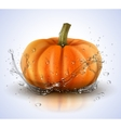 Pumpkin isolated on white with splashes of water vector image vector image