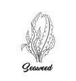 seaweed black ink vector image vector image