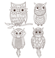 Set of cute owls vector image vector image