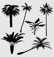 tropical palm tree silhouettes isolated vector image vector image