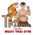 true training 1 color thai boxer and tiger vector image vector image
