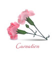 carnation flowers in realistic style vector image vector image