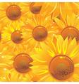 Glossy sunflower wallpaper vector image vector image