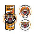 international tiger day badge template set vector image