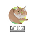 maine coon cat flat design vector image