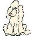 Poodle dog cartoon vector image