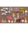 Set of different mushrooms vector image