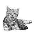 Cat 08 vector image vector image