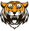Ferocious tiger head vector image vector image
