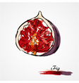 Fig fruit vector image