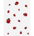 Ladybirds vector image