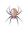 illuastration of big spider vector image