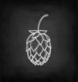 chalk sketch of hops vector image vector image