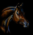 portrait an arab horse color realistic drawing vector image vector image