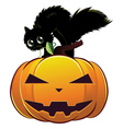 Black cat on pumpkin vector image