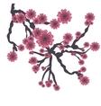 cherry blossom icon iimage vector image