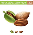 almond on white background vector image