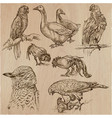 birds animals around the world - an hand drawn vector image vector image