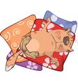 Cat on pillows Cartoon vector image vector image