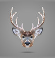 Deer low poly portrait vector image vector image