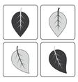gray leaf set vector image vector image