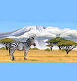 african zebra on white background vector image vector image