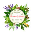 Fresh herbs and spices round label for food design vector image