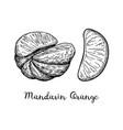 ink sketch of mandarin orange vector image vector image