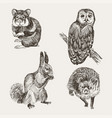 set of highly detailed hand drawn squirrel owl vector image