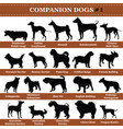 companion dogs silhouettes 2 vector image
