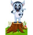 Cute baby lemur presenting on tree stump
