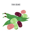 exotic fava beans heap nutritious and healthy vector image