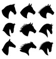 horse head silhouettes vector image vector image