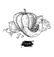 pumpkin drawing set isolated hand drawn vector image vector image