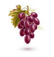 red grape bunch with ripe berry and leaf vector image vector image