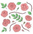 set pink rose flowers with buds leaves vector image