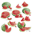 a set pieces watermelon a collection of vector image vector image