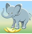 The baby elephant vector image