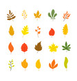 autumn leaves collection tree leaf fall flat vector image vector image