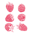 Drawing raspberry isolated vector image vector image
