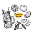 ink sketch of tangerines vector image vector image